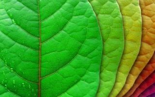 Leaves, by Lena, stockvault.net