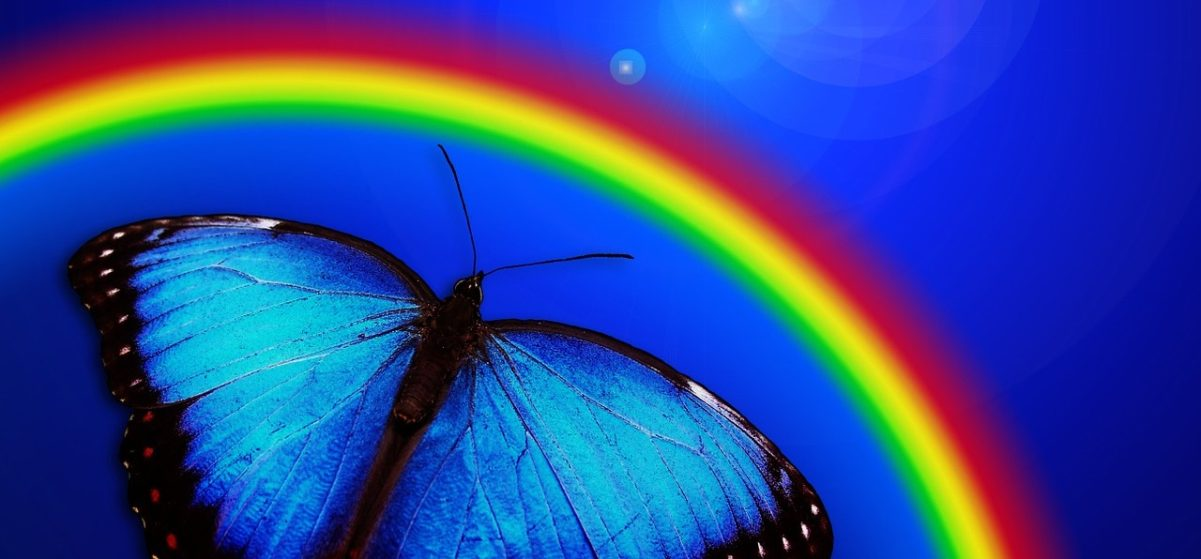 Rainbow butterfly crop, nn, 765126_1280